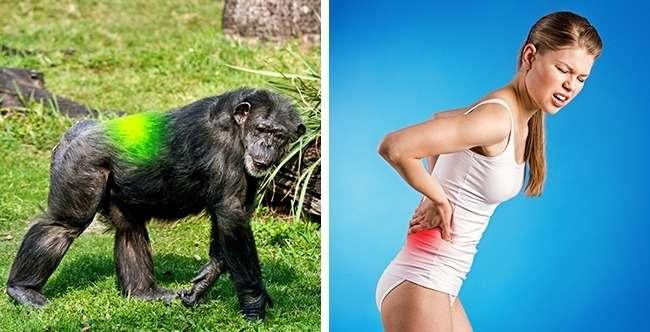 7доказательств того, что человек все еще эволюционирует