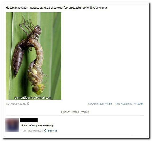 Смешные комментарии из социальных сетей-42 фото-