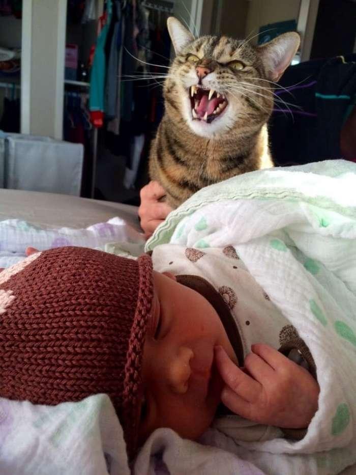 30 смешных кошачьих фотографий из интернета-31 фото-