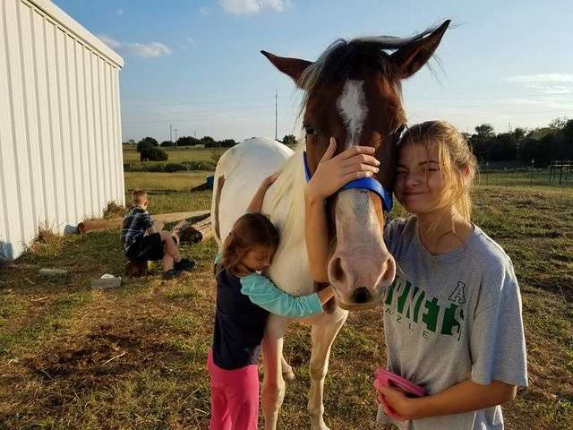 Пони, которого готовили на убой, вдруг обрёл любовь и дом-7 фото + 1 видео-