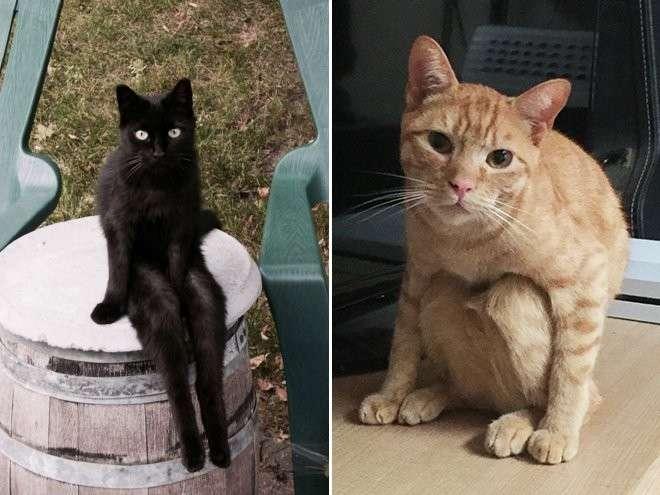 Смешные кошки, которые разучились сидеть по-кошачьи-17 фото-