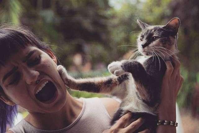 Кошка человеку друг-31 фото-