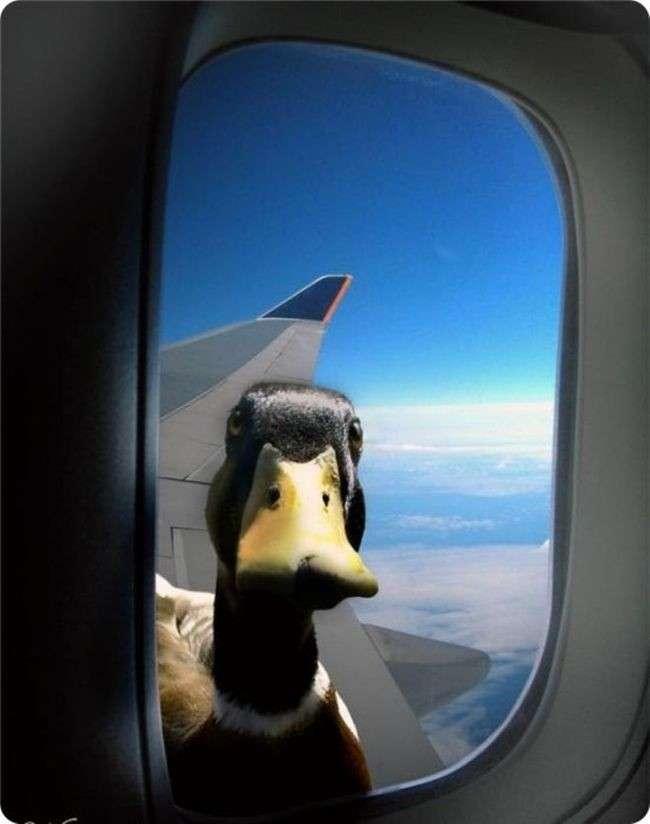 Что происходит, когда птица сталкивается с самолетом?-10 фото-