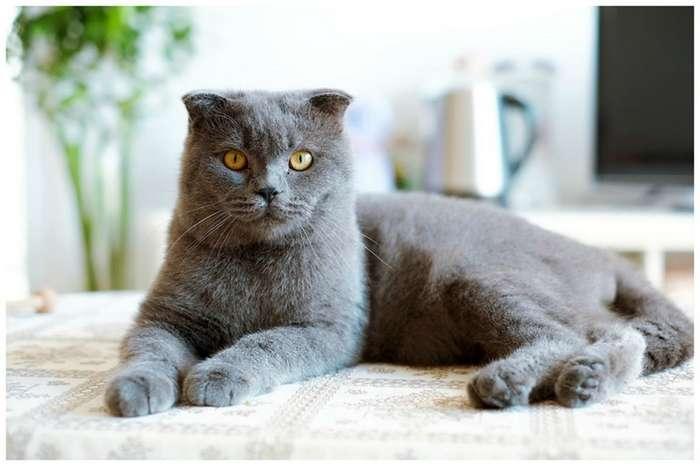 Муж или кот? Выбор очевиден-2 фото-