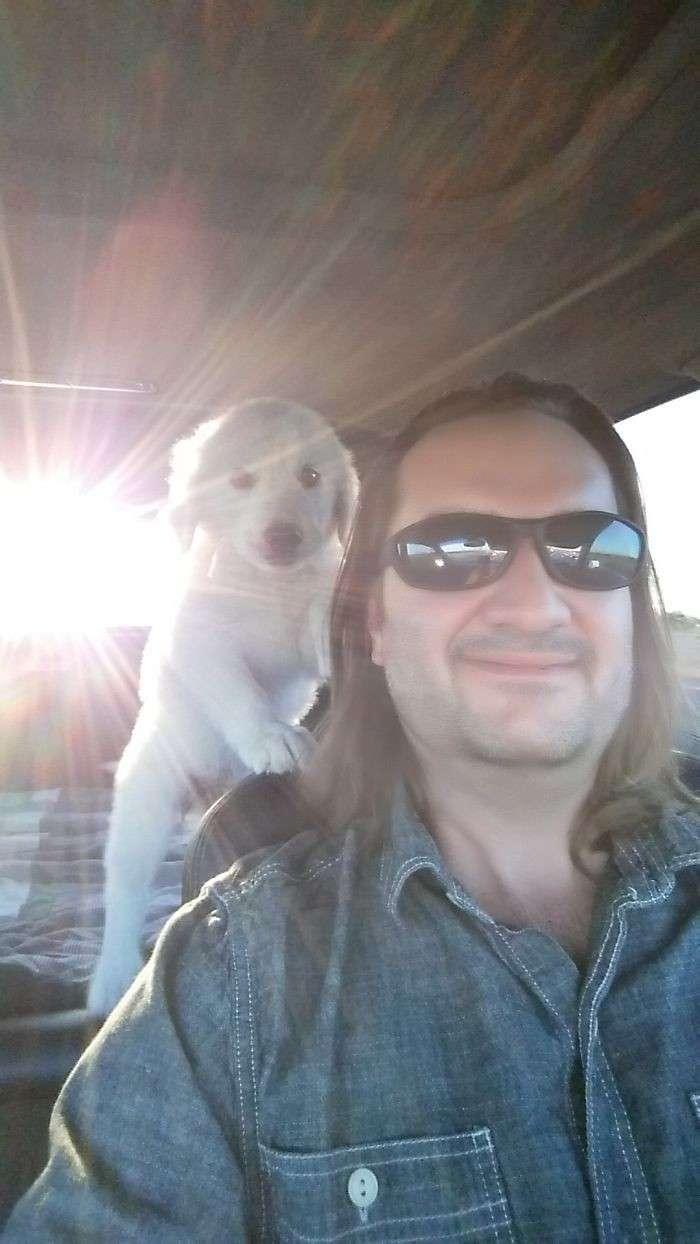 Собаки и хозяева: первая встреча-36 фото + 4 гиф-