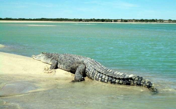 Опасные пляжи мира — 7 стран где отдыхать может быть опасно-1 фото-