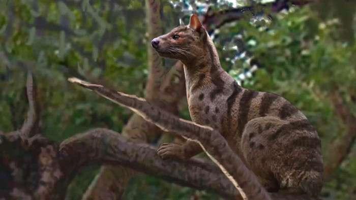 В Африке найден новый вид древних хищников — Pakakali-1 фото-