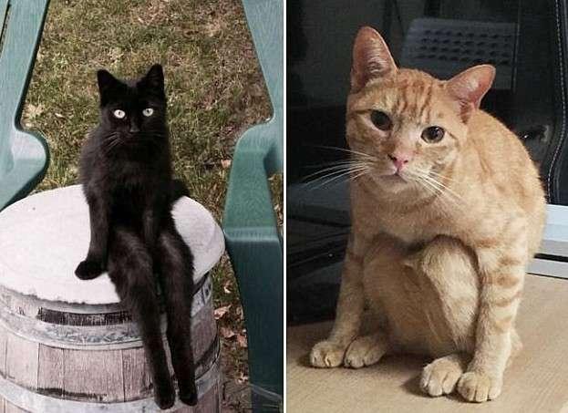Эти коты - уже почти люди!-19 фото-