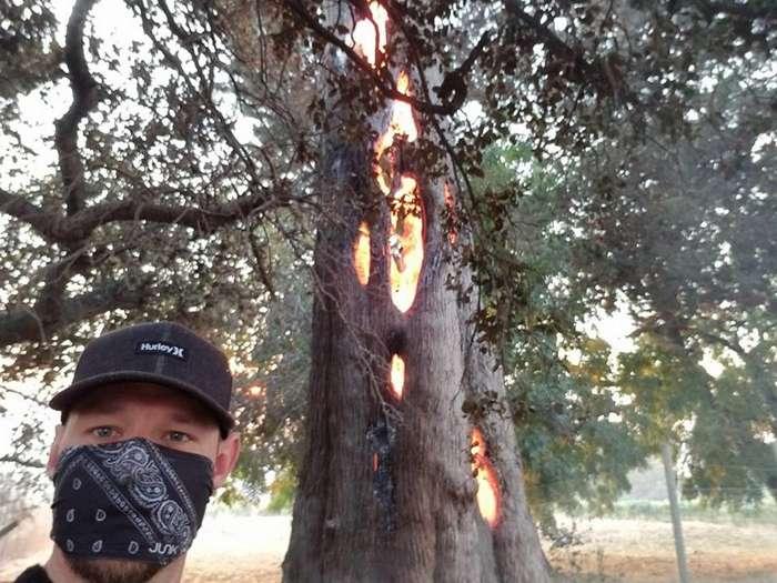 Мужчина нашёл треснувшее дерево, сгорающее изнутри-5 фото + 1 видео-