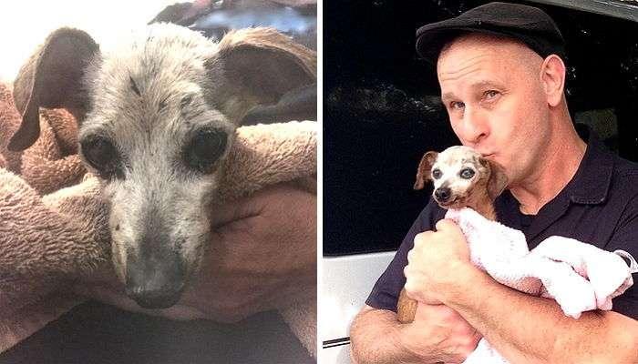 Невероятная история усыновления бездомной чихуахуа: чудеса рядом с нами!-5 фото-