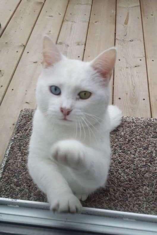 """""""Псс, еда есть? А если найду?"""" Нахалёнок кот и добрые соседи или инструкция по выживанию-7 фото-"""