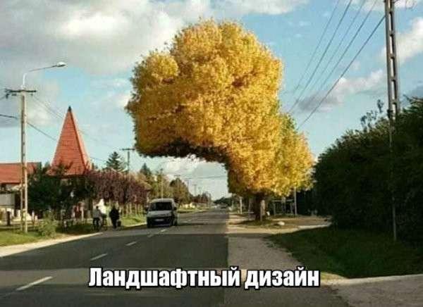 Смешные картинки с надписями-40 фото-