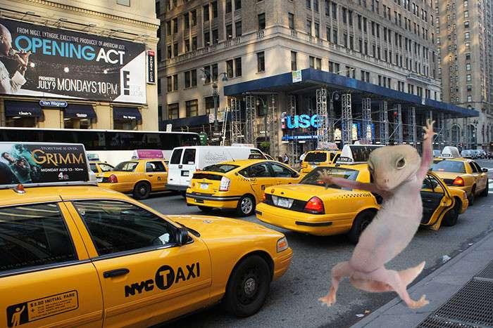 Удивительно фотогеничный геккон развязал новую битву фотошоперов-20 фото-