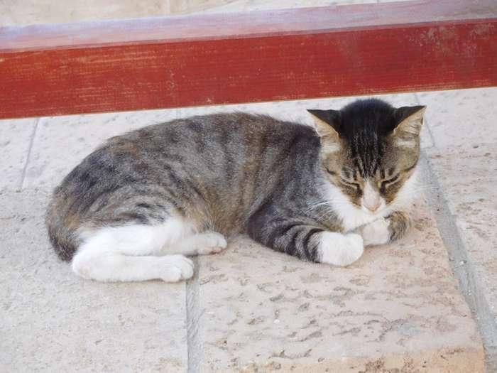 Негламурные котики-18 фото-