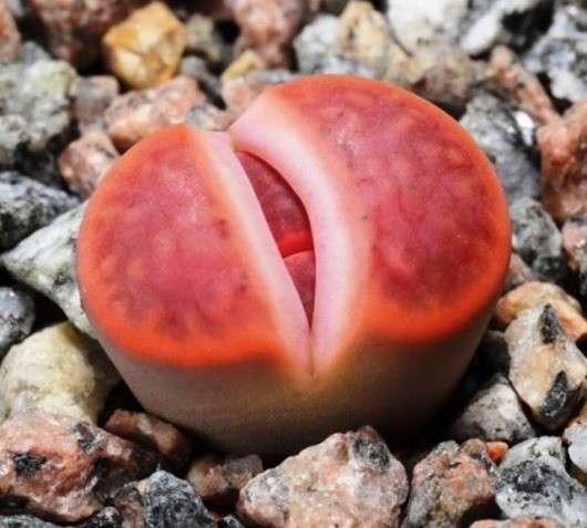 Самые причудливые растения мира-25 фото-