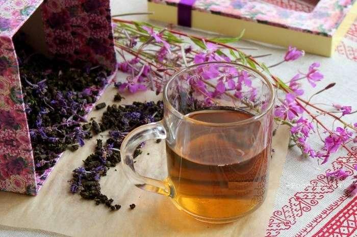 Таинственное растение наш Иван-чай-3 фото-