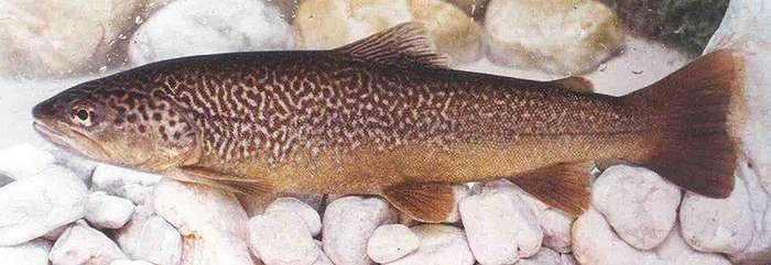 Кого мы называем лососем и лососёвыми рыбами-10 фото-