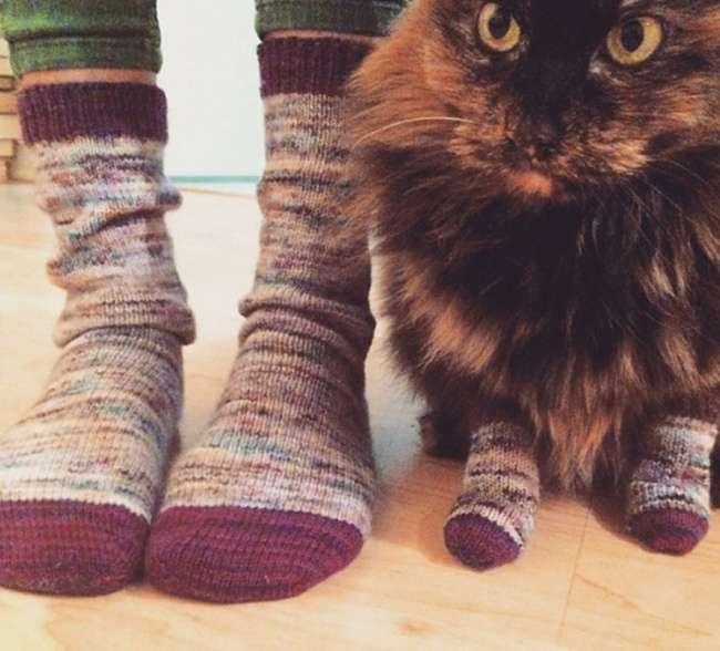20шикарных фотографий, вкоторых вся суть котов