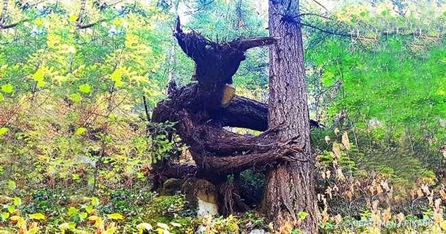 12жутких лесов, вкоторых страшно даже днем