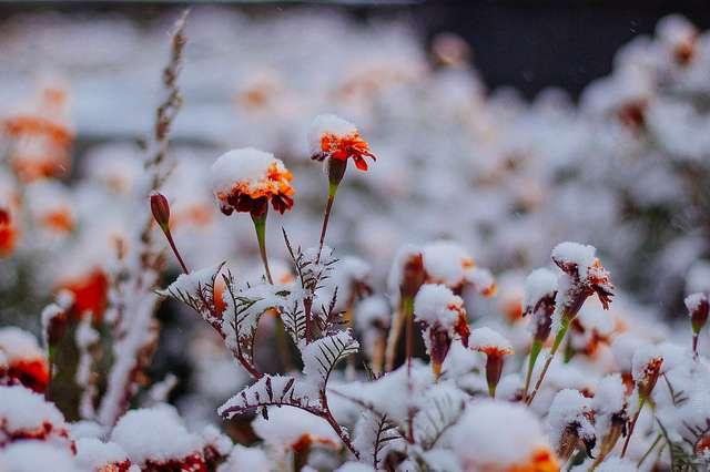 20фотографий, которые доказывают, что нет ничего прекраснее зимы
