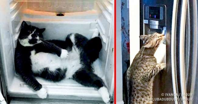 25озадаченных животных, которые никак неожидали увидеть хозяина