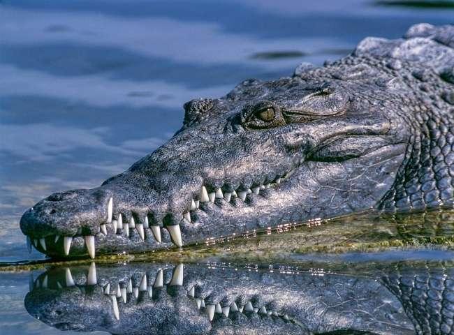 12детских фотографий самых свирепых хищников планеты