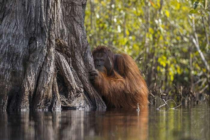 Лучшие кадры, которые прислали на фотоконкурс National Geographic Nature Photographer 2017
