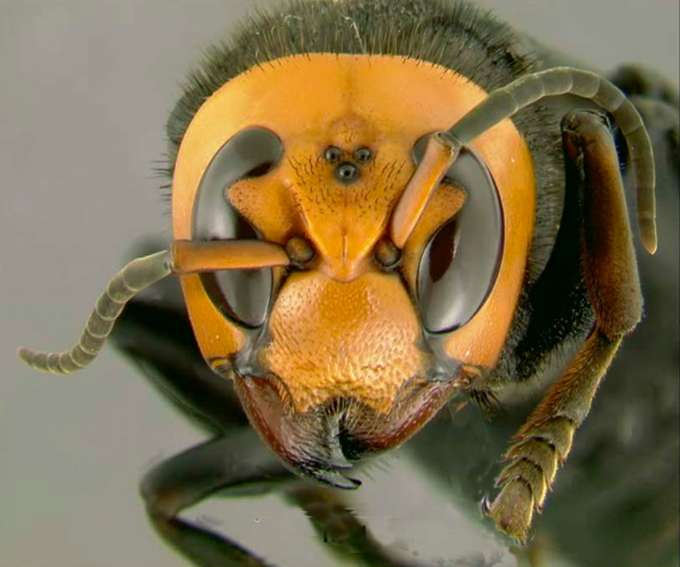 Третья казнь египетская. Самые массовые нашествия насекомых за последние десять лет