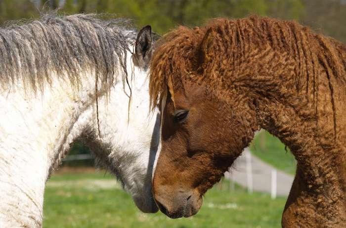 Зачем лошади нужны кудри?