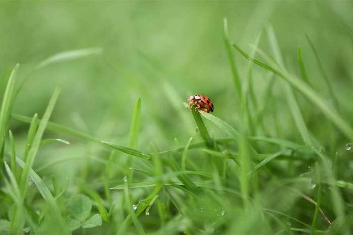 Живая природа за последнюю неделю в фотографиях