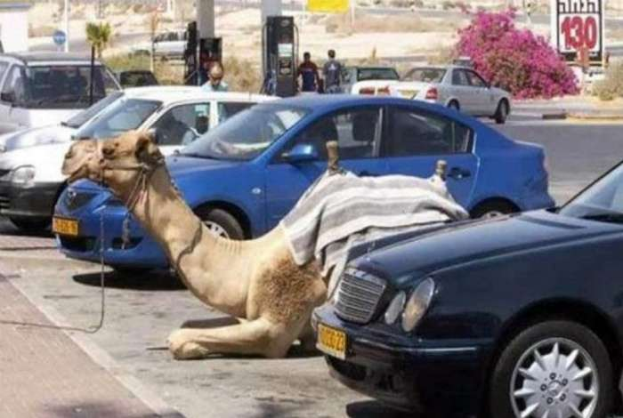 -Жить красиво-: 19 сумасшедших ситуаций, которые могли произойти только в Дубае