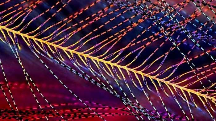 Секс долгоносиков, яйца мотыля и другие фото при помощи микроскопа (35 фото)