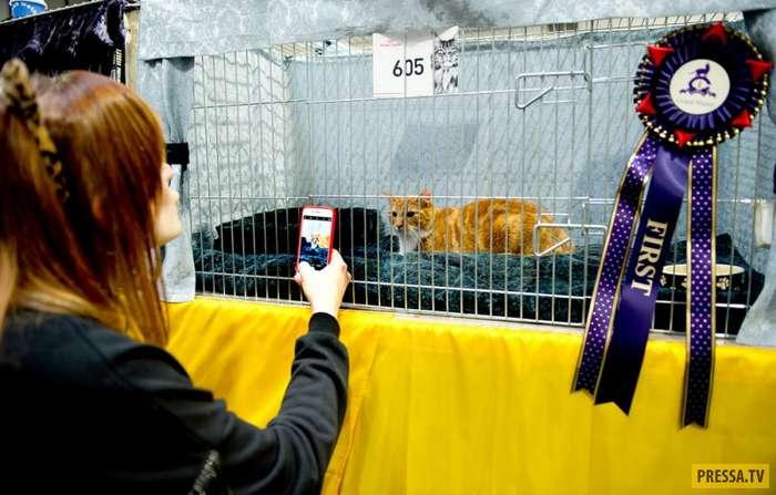 Выставка кошек GCCF Supreme Cat Show в Англии (21 фото)
