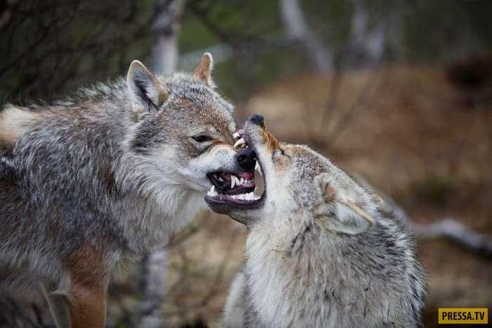 Топ 13: Самые страшные животные в мире (19 фото)