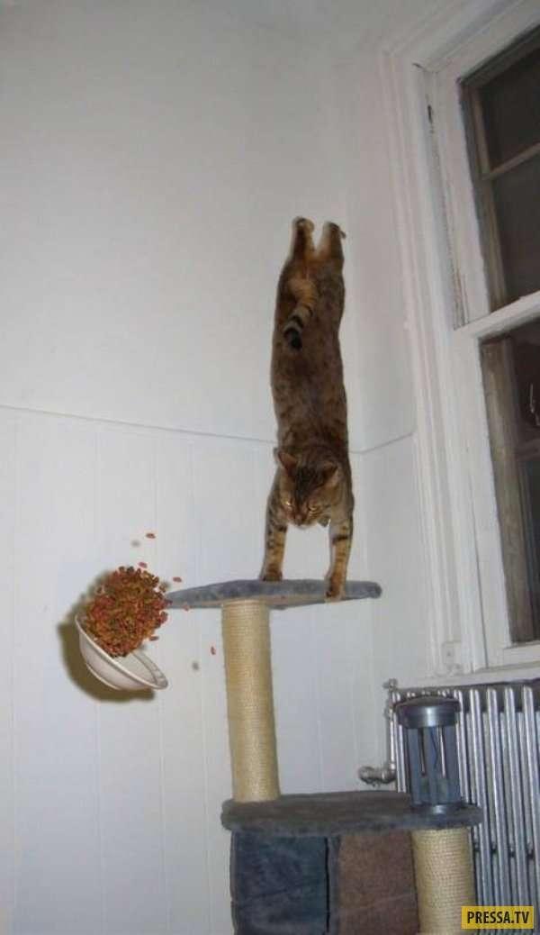 Забавные и милые котики (20 фото)