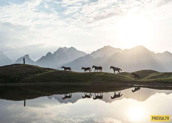Победители международного конкурса Nature Photographer of the Year 2017 (13 фото)