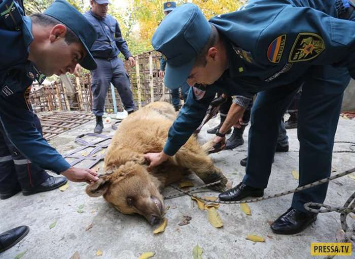 Спасение пары медведей Даши и Миши, которых 10 лет содержали в невыносимых условиях в Ереване (13 фото)