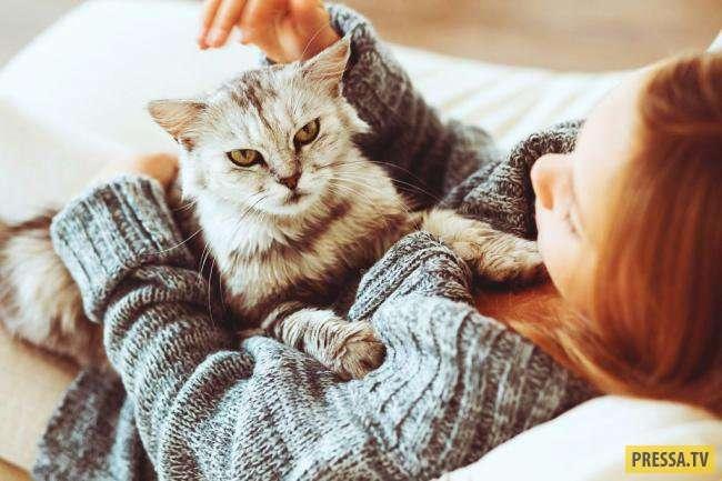 Топ 10: Интересные факты о кошках (11 фото)