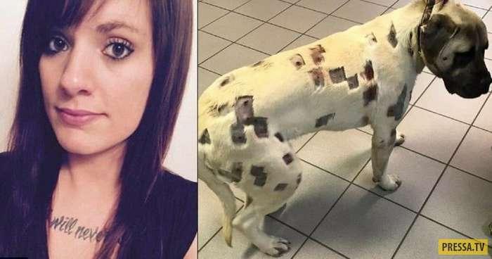 В эту собаку выстрелили 70 раз, и только 27 пуль удалось вытащить! Жестокость зашкаливает… (11 фото)