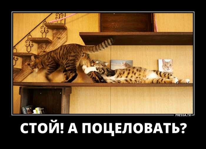 Смешные пятничные демотиваторы (45 фото)