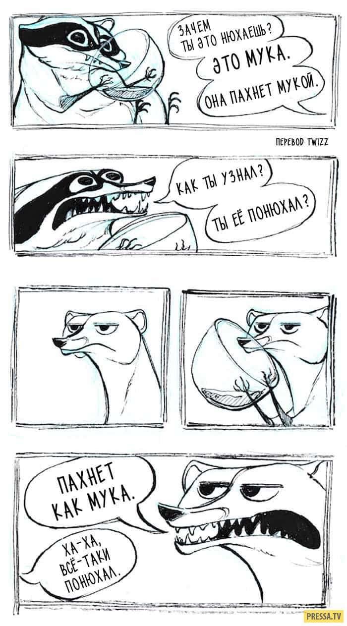 Крутые комиксы про енотика – в них каждый узнает себя! (25 фото)