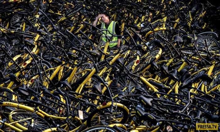 В Китае обанкротилась крупнейшая фирма по прокату велосипедов Bluegogo (3 фото)