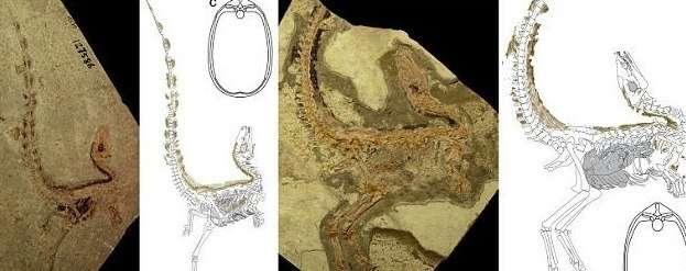 Ученые реконструировали динозавра-енота-7 фото + 1 видео-