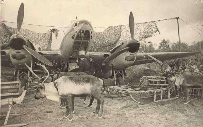 Животные на войне-12 фото + 1 видео-