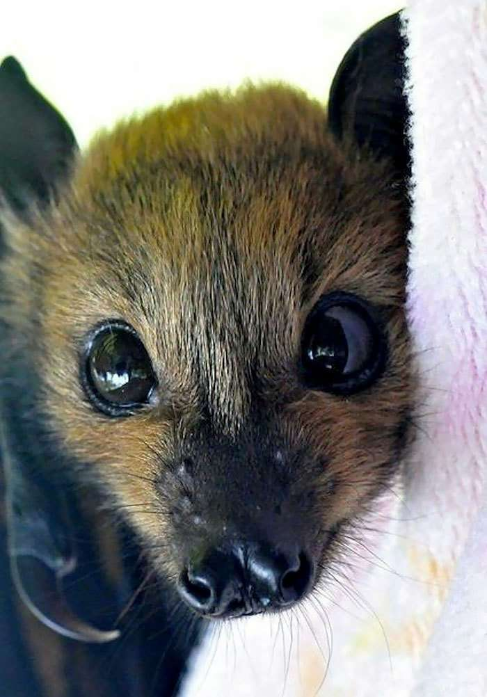 Эта фотоподборка изменит ваше мнение о летучих мышах!-33 фото + 8 гиф-