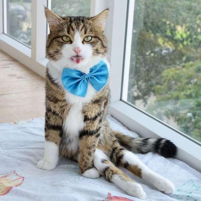 Знакомьтесь, очаровательный кот Рекси - обладатель самого гибкого языка-16 фото-