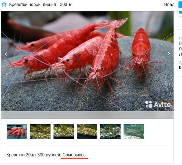 Смешные объявления с Avito, которые поднимут вам настроение-25 фото-