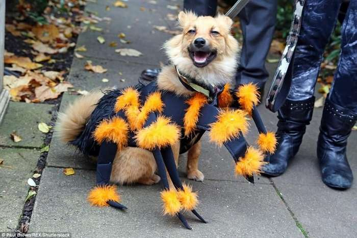 Эти собаки тоже решили отметить Хэллоуин-21 фото-