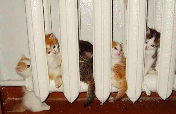 25 фотографий котов, которые любят тепло больше всего на свете-26 фото-