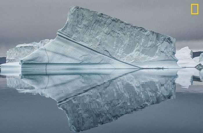 Фотоконкурс National Geographic -Фотограф года-: лучшие в мире снимки живой природы-16 фото-